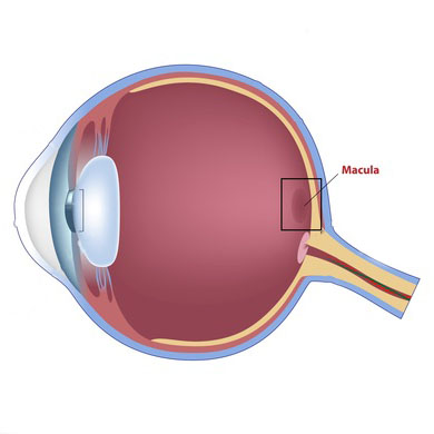 retina disorders macular degeneration