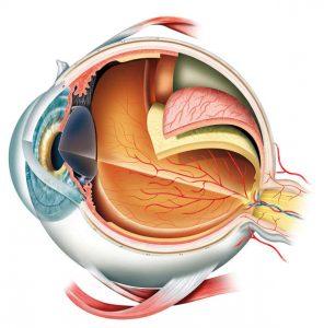 retina eye nj