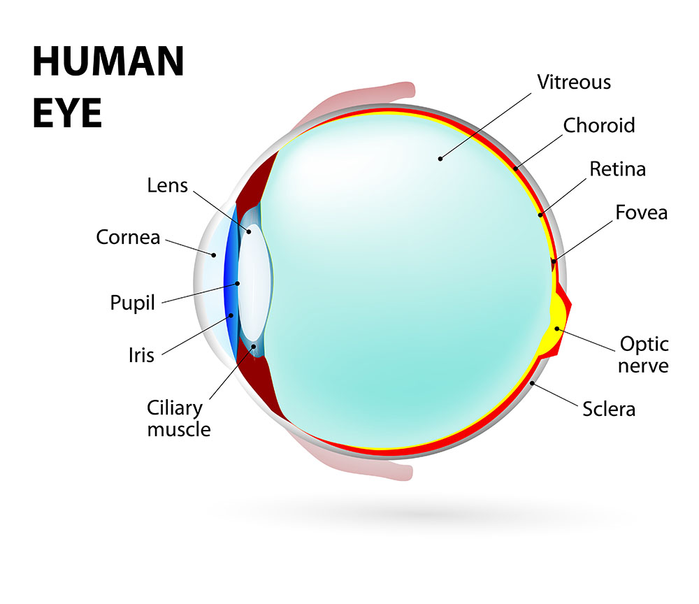 Corneal Diseases causes, symptoms & treatment New Jersey