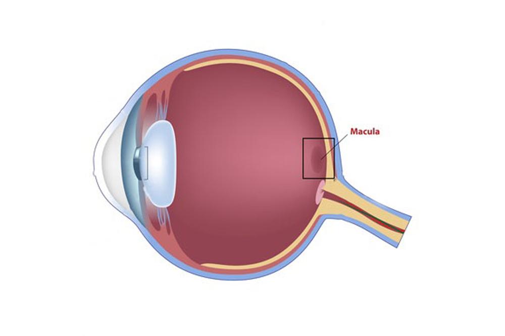 Retina Disorders Treatment Passaic New Jersey